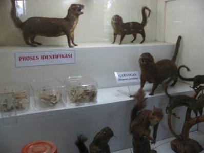 Museum Zoologi Frather Vianney